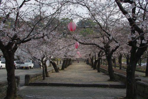 菊池神社参道2
