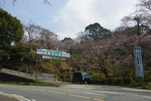 城山公園の桜2